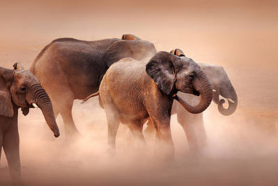 Group Photograph - Elephants In Dust by Johan Swanepoel