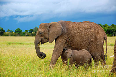 Elephants In Masai Mara Art Print by Charuhas Images