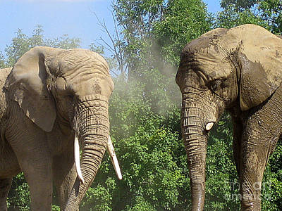 Photograph - Elephants In The Sand by Nina Silver