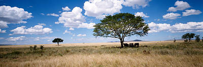 Hot Weather Photograph - Elephants, Kenya, Africa by Panoramic Images