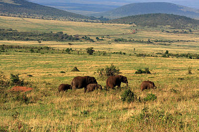 Photograph - Elephants Of The Masai Mara by Aidan Moran