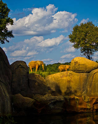 Photograph - Elephants On The Ridge by Jonny D
