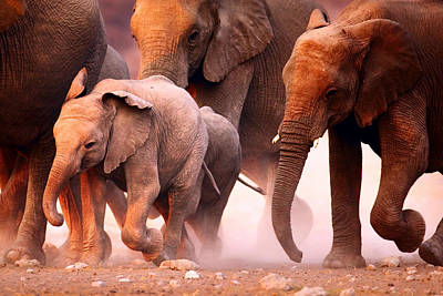 Animals Royalty-Free and Rights-Managed Images - Elephants stampede by Johan Swanepoel