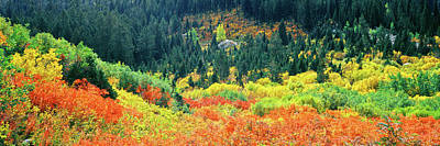 Cascade Canyon Photograph - Elevated View Of Autumn Trees, Cascade by Panoramic Images