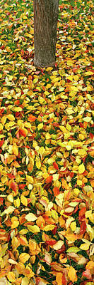 Fallen Leaf Photograph - Elevated View Of Fallen Leaves, Pacific by Panoramic Images