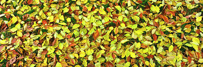 Fallen Leaf Photograph - Elevated View Of Fallen Leaves, San by Panoramic Images