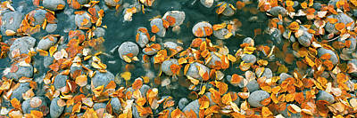 Fallen Leaf Photograph - Elevated View Of Leaves In A Creek by Panoramic Images