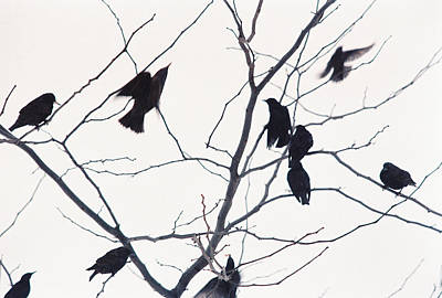 Photograph - Eleven Birds One Morsel by Ric Bascobert
