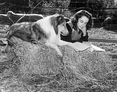 Movie Star Photograph - Elizabeth Taylor And Lassie by MMG Archives