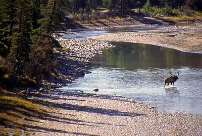 Photograph - Elk Crossing by Jim Vance