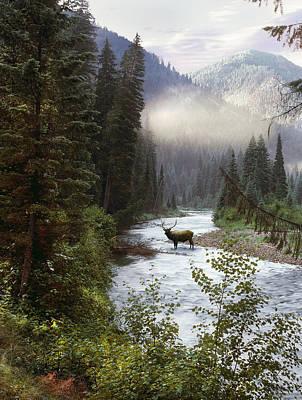 Elk Photograph - Elk Crossing by Leland D Howard