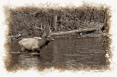 Photograph - Elk Crossing Stream by Dan Friend