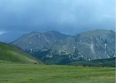 Photograph - Elk Herd On The Edge by Stephen Schaps