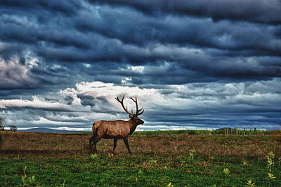 Photograph - Elk In Field by Jeff Folger