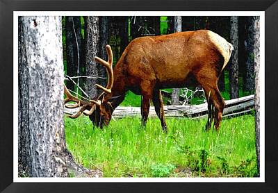 Elk In Montana Art Print by Larry Stolle