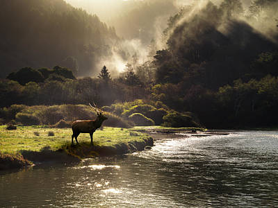 Photograph - Elk In Sinkyone Wilderness by Leland D Howard