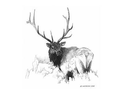 Wall Art - Drawing - Elk by Paul Shafranski