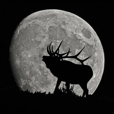 Photograph - Elk Silhouette On Moon by Ernie Echols