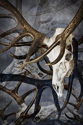 Photograph - Elk Skull Art by Randall Nyhof