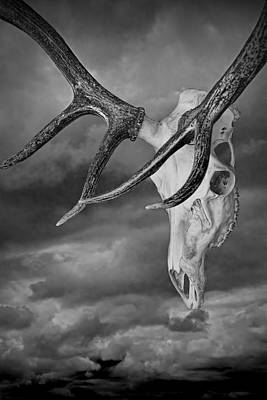 Trophy Buck Photograph - Elk Skull With Sky by Randall Nyhof