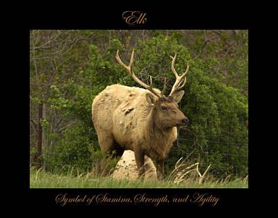 Photograph - Elk Symbol Of by Marty Maynard