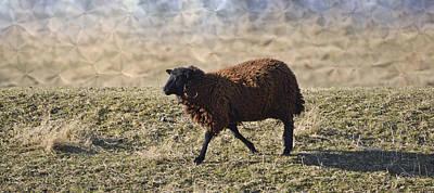 Photograph - Ella's Little Lamb by Trish Tritz