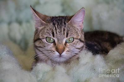Nirvana - Ello Kitty by Jennifer Stevens