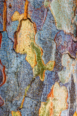 Photograph - Elm Bark  by Heidi Smith