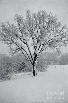 Photograph - Elm In Snow by Kay Pickens