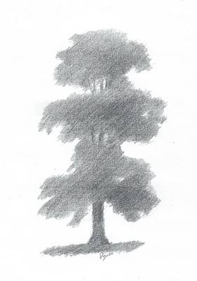 Elm Tree Drawing Number One Art Print by Alan Daysh