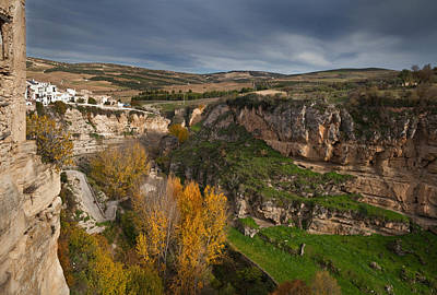 Elm Photograph - Elm Trees In Autumn In The Tajo Or by Panoramic Images