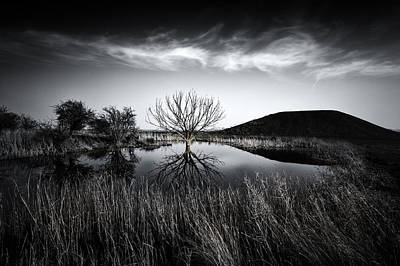 Sheppey Photograph - Elmley Marshes by Ian Hufton