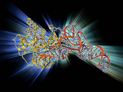 Trna Photograph - Elongation Factor Tu And Trna by Laguna Design