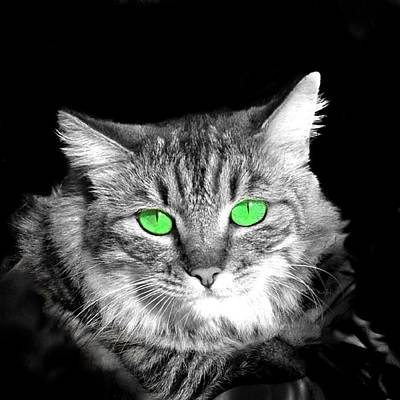 Cat Digital Art - Elsa by Cindy Edwards