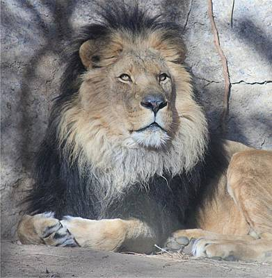Photograph - Elson Being Regal by Diane Alexander