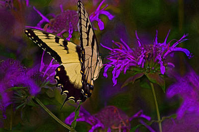 Elusive Butterfly Of Love Art Print by Mamie Thornbrue
