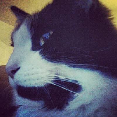 Elvis Photograph - Elvis Is The Man (cat). #petco #pet by Pamela Cushman