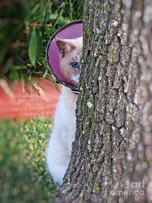 Photograph - Embarrassed Kitty - Cat Hiding Behind Tree by Ella Kaye Dickey