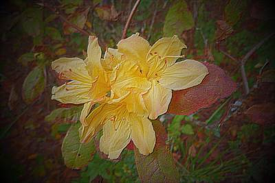 Photograph - Embossed Azalea by Pete Trenholm