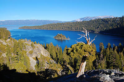 Photograph - Emerald Bay And Reaching Tree by Debra Thompson