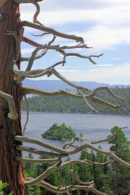Emerald Bay Through Cedar Art Print by Mickey Hatt