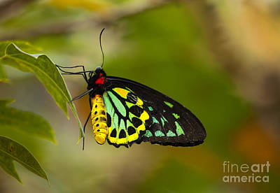 Cairns Photograph - Emerald Beauty by Mike  Dawson