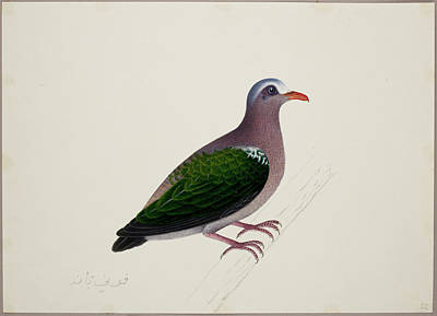 Indica Photograph - Emerald Dove by British Library