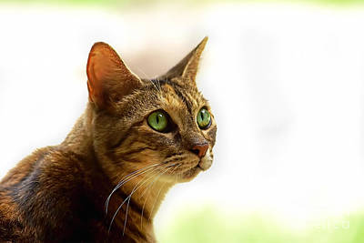 Art Print featuring the photograph Emerald Eyes by Olga Hamilton