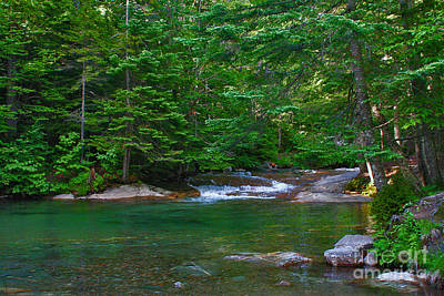 Photograph - Emerald Forest by LR Photography