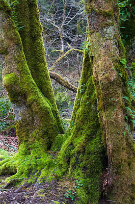 Photograph - Emerald Forest by Tikvah's Hope