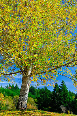 Photograph - Emerald Green And Gold Of Fall by Joseph Bowman