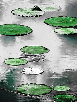 Photograph - Emerald Green Lotus Leaves by Shawna Rowe