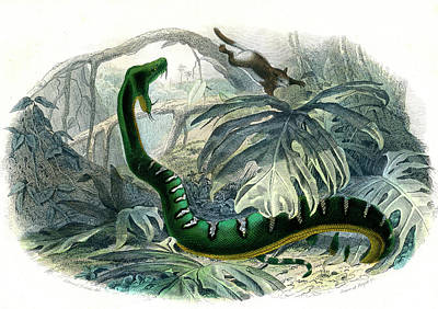 Emerald Tree Boa Art Print