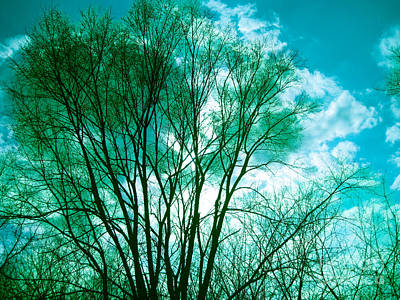 Photograph - Emerald Tree by Casey Tovey And Sherry Lasken